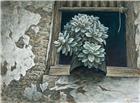 窗台上的宝石花